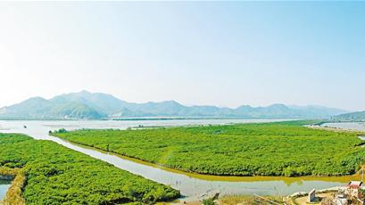 镇海湾红树林湿地公园获批成为国家级(试点)