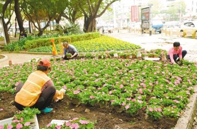 """我市大力开展""""四化""""行动提升城市品质  """"神器""""清洗路面 鲜花扮靓街头"""