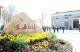 江门打造全省乡村振兴的示范和标杆