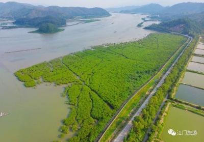 江门镇海湾红树林怎么玩?