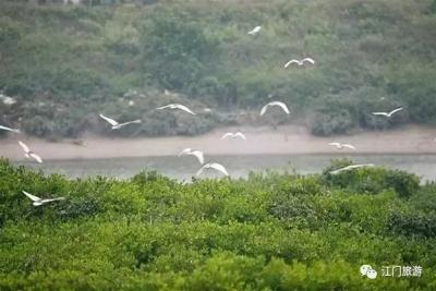 镇海湾红树林怎么玩?赏红树、观候鸟、吃海鲜大餐!