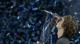 ATP年终总决赛兹维列夫夺冠
