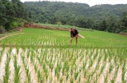 多部委发布推进村庄规划工作意见:防止调减耕地和永久农田面积