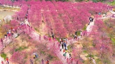 白水带桃花园3天迎客逾16万人次