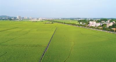 恩平加快從農業大市向農業強市邁進
