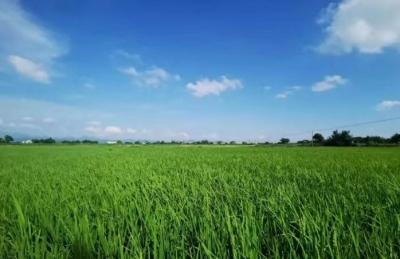 全市现代农业产业园工作会议召开 加强统筹谋划高质量建设