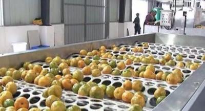 国家产业园绩效预评价 新会陈皮产业园排名第一