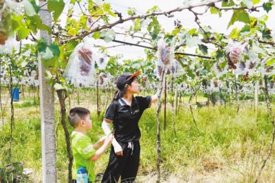 高新區(江海區)加快農業農村現代化建設