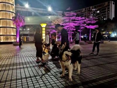 市民持续关注犬只户外活动管理,建议划定犬只活动区域