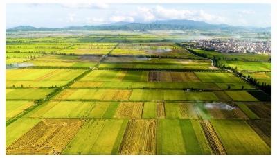 彭章瑞調研都市農業生態區建設 為鄉村振興提供強大助力