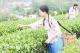 江门:将小茶叶做成大产业!