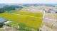 恩平早造水稻迎来收获季