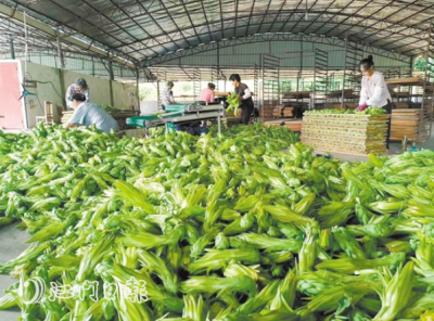 桃源镇中胜村委会发展霸王花种植 探索观光农业实践