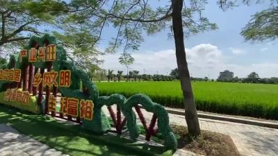 台山市强化党建引领 让美丽乡村更有精气神