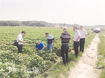 中国银行江门分行积极开展结对扶贫 促进新兴农业产业发展