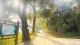 鹤山市古树保护公园即将对外开放