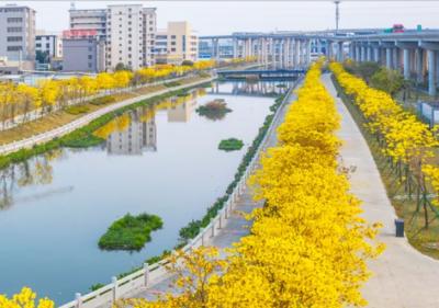 彭章瑞調研江海區黑臭水體整治、污染防治工作時強調 :真正實現水清岸綠景美